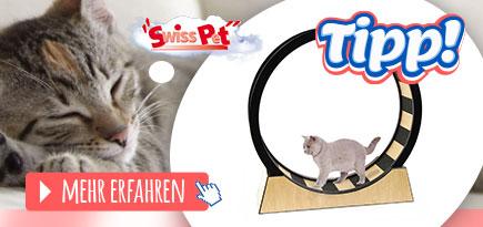 Katzenrad Katze
